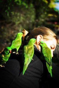 manja-parrots1