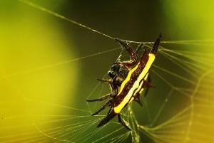 half-spider-half-bug