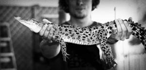 holm-holding-croc