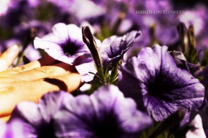 hands-on-flowers